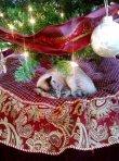 Presents 4 Pets